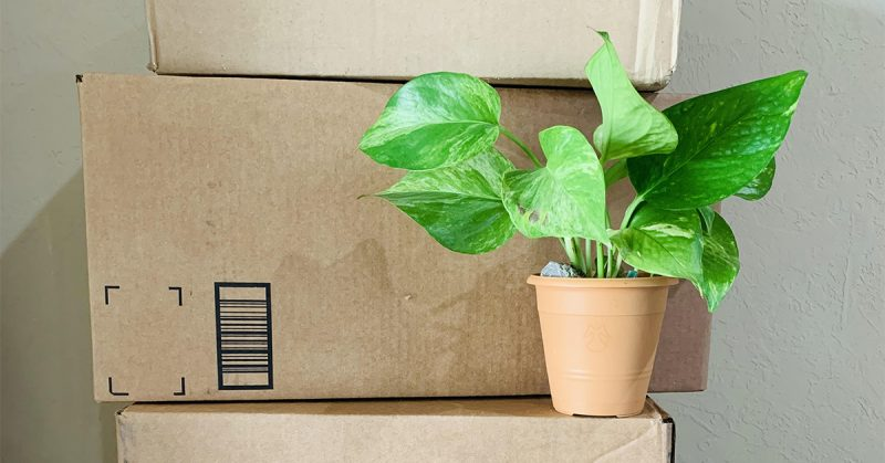 A plant on top of boxes